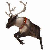 Reindeer 1. One of Santa's reindeer Stock Photo
