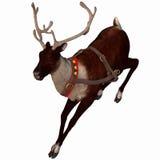 Reindeer 2. One of Santa's reindeer Royalty Free Stock Photography