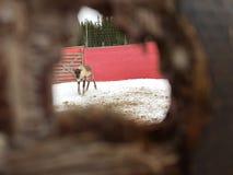 reindeer Стоковая Фотография RF
