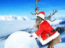 reindeer Стоковые Фотографии RF