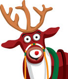 Reindeer. Front end of a reindeer looking forward Royalty Free Stock Image