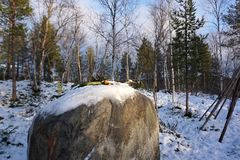 Reindeer antlers and apples worship items on the large rock at S Stock Images