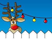 Reindeer behind a fence Stock Photos