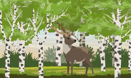 Reindeer in a birch forest. Deer. Wild animals of Eurasia and North America vector illustration