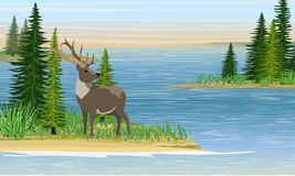 Reindeer with branched horns on the sea or a large lake. Sandy beach with grass and fir trees. Forest Lake. Summer. Realistic Vector Landscape royalty free illustration