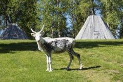 Reindeer calf Stock Photos