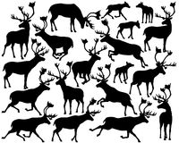 Reindeer or caribou silhouettes. Set of eps8 editable vector silhouettes of reindeer or caribou standing, walking, running and leaping Royalty Free Stock Images