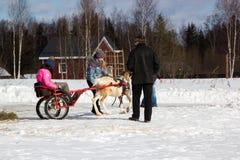 Reindeer cart at celebration of maslenitsa in the suburbs Stock Image