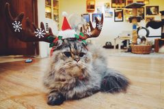 Reindeer cat Royalty Free Stock Image