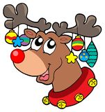 Reindeer with Christmas decorations Royalty Free Stock Photo