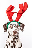 Reindeer-dalmatian Stock Photos