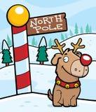 Reindeer Dog Stock Photos