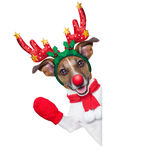 Reindeer dog. Behind a blank banner with a red nose  and waving hand isolated on white background Stock Image