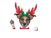 Reindeer dog Royalty Free Stock Photos