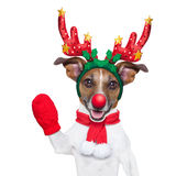 Reindeer dog. With a red nose  and waving hand isolated on white background Stock Photo