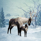 Reindeer and Fawn Winter Greeting Card Royalty Free Stock Photography