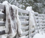 Reindeer fur Yllas Finland royalty free stock photos