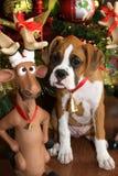 Reindeer Games Stock Photo