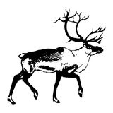 Reindeer (graphic design)0 Royalty Free Stock Photos