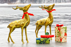 Reindeer on Ice Royalty Free Stock Image