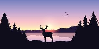 Reindeer by the lake at beautiful sunrise stock illustration