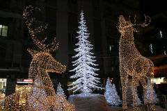 Reindeer lights Stock Image