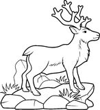 Reindeer looks into the distance. Drawing which depicts a deer caribou Stock Photography