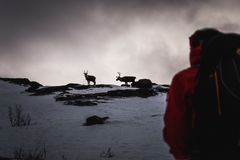 Reindeer magic winter mountain stare-down royalty free stock image
