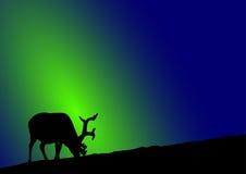 Reindeer northern lights. A reindeer in front of northern lights Stock Images