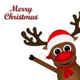 Reindeer peeking sideways Royalty Free Stock Photo
