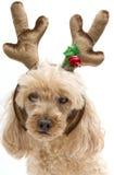 Reindeer Pooch Royalty Free Stock Image