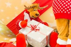 Reindeer preparing Christmas tree lights and presents Stock Photos