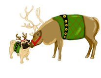 Reindeer and Pug stock images