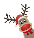Reindeer red nose scarf santa claus hat Stock Photography
