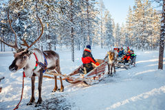 Reindeer safari. Family with kids at reindeer safari in winter forest in Lapland Finland Royalty Free Stock Image