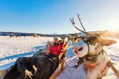 Reindeer safari. Family of mother and her daughter at reindeer safari on sunny winter day in Northern Norway Stock Photography