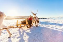 Reindeer safari. Family of mother and her daughter at reindeer safari on sunny winter day in Northern Norway Stock Images