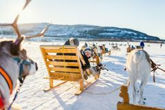 Reindeer safari. Teenage boy and his family sledding at reindeer safari on sunny winter day in Northern Norway Stock Photography