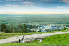 Reindeer By The Ski Lift Stock Images