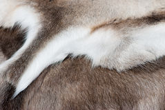 Reindeer skin. Royalty Free Stock Photos