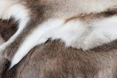 Reindeer skin. Royalty Free Stock Photos