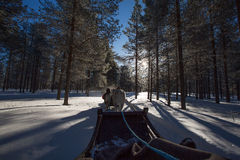 Reindeer Sled Royalty Free Stock Images
