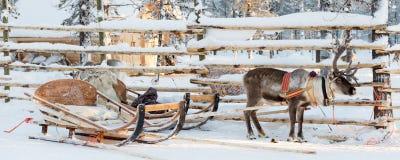 Reindeer sledge, in winter, Lapland Finland. Reindeer sledge, in winter, Lapland, Finland stock photos
