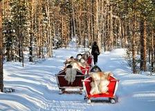 Reindeer sleigh caravan safari with people forest Lapland Northern Finland stock image