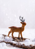 Reindeer In Snow Royalty Free Stock Photos