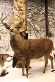 Reindeer in snowy forest Stock Photos