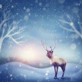 Reindeer in winter. Reindeer standing in the snow Royalty Free Illustration