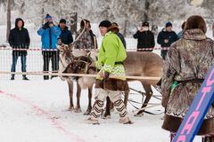 The reindeer teams are ready to start royalty free stock image