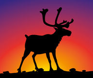 Reindeer - vector silhouette and sunset Stock Photography