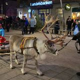 Reindeer visiting on Main Street Royalty Free Stock Photos